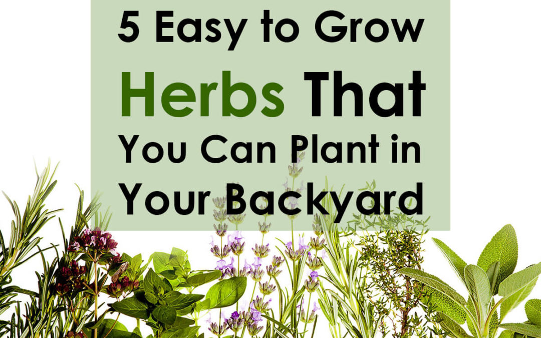 5 Easy To Grow Medicinal Herbs That You Can Plant In Your Backyard
