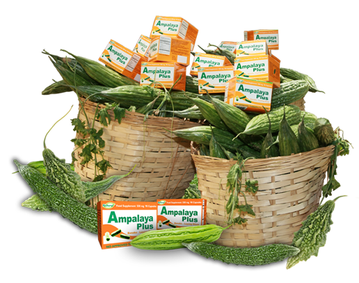 Ampalaya plus food supplement for diabetics to control blood philippines best herbal supplements forumfinder Gallery